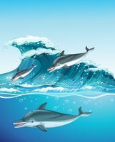 Tre delfiner som simmar i havet