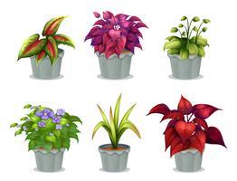Sechs verschiedene Pflanzen vektor
