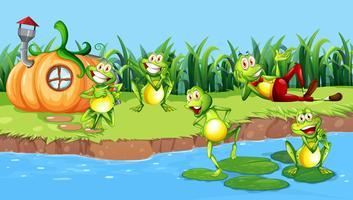 Glücklicher Frosch neben Fluss