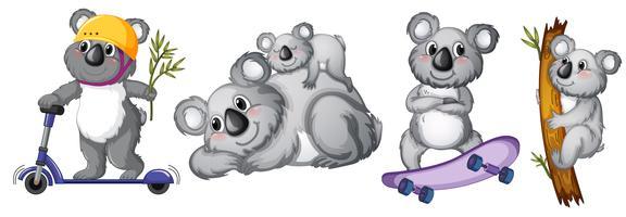 Set med koala björn tecken vektor