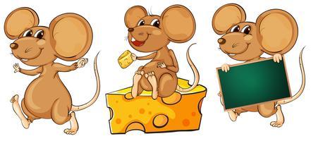 Drei verspielte Mäuse