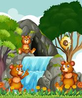 Bären entspannen sich am Wasserfall