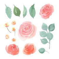Blommor och blad akvarellelement sätter handmålade frodiga blommor. Illustration av ros, pion, små blommor vintage stil akvarell isolerad på vit bakgrund. Design inredning för kort, spara datum, bröllop inbjudningskort, affisch, bakgrund. vektor