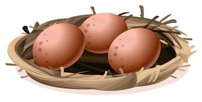 Ein Nest mit drei Eiern