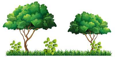 Naturbaum auf weißem Hintergrund vektor
