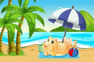 En katt som slappar av vid stranden
