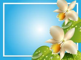 Gränsmall med vita orkidéer vektor