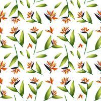 Fågel av paradiset sömlöst mönster vektor