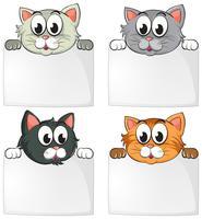 Süße Katzen mit leeren Papieren