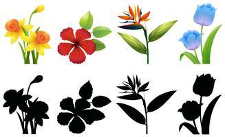 Fyra typer av blommor på vit bakgrund