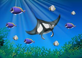 Stachelrochen und viele Fische unter dem Ozean vektor