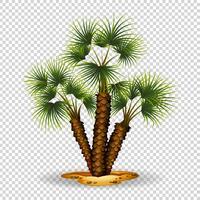 Trädgårds tema med palmträd