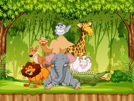 Vilt djur i djungeln vektor