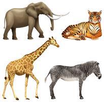 Vier afrikanische Tiere vektor