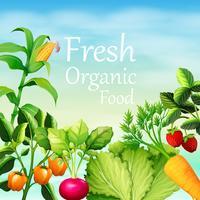 Affischdesign med många grönsaker