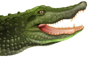 Ein Krokodil vektor
