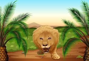 En lejon i djungeln vektor