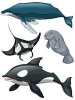 Olika slags valar och fiskar vektor