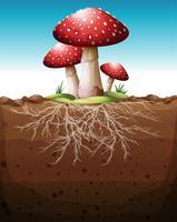 Röd svamp växer från marken
