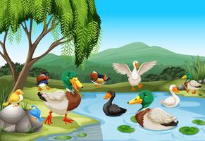 Parkszene mit vielen Enten und Vögeln vektor
