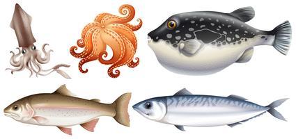 Meeresfrüchte vektor