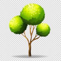 Gree träd på transparent bakgrund
