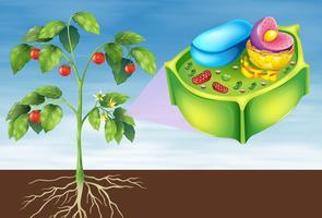Pflanzenzelle vektor