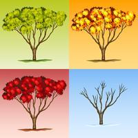 Trädets scen i olika årstider vektor