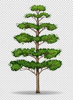 Högt träd på transparent bakgrund