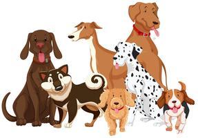 Olika typer av hundar vektor