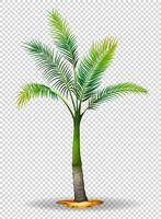 Palme auf transparentem Hintergrund vektor