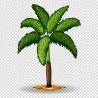 Palm på transparent bakgrund