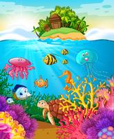 Seetiere, die unter dem Meer schwimmen
