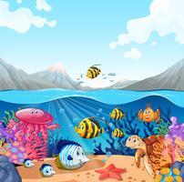 Natur scen med fisk och sköldpadda vektor