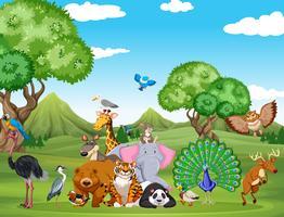 Waldszene mit vielen wilden Tieren vektor