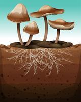 Färsk svamp med rötter under jord