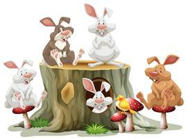 Fünf Hasen sitzen auf Baumstamm