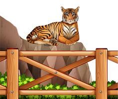 Ein Tiger über der Klippe vektor