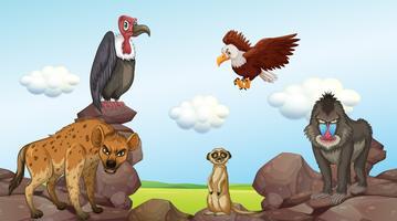 Wilde Tiere stehen auf Felsen