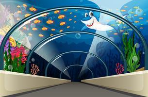 Offentligt akvarium med fisk och korallrev