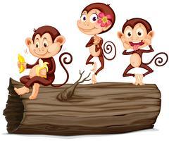 Tre apor på stocken