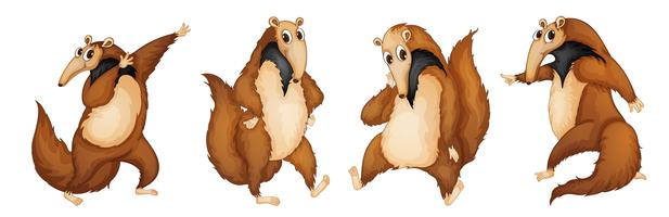 Ameisenbären