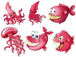 Havsdjur i rosa färg