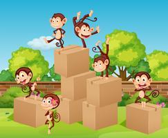Affen klettern die Boxen hoch