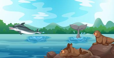 Scen med delfiner och sälar