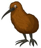 Kiwi fågel