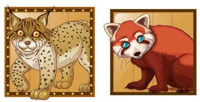 Tiger och röd panda på kvadratiska märken