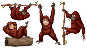 orangutanger vektor