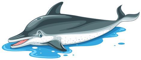 Delphin mit nettem Gesicht auf Wasser vektor