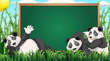 Board Design mit drei Pandas auf Gras vektor